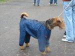 В такой курточке не страшен дождь.